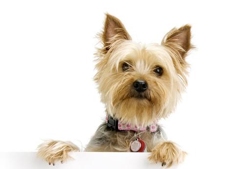 smalldoggie
